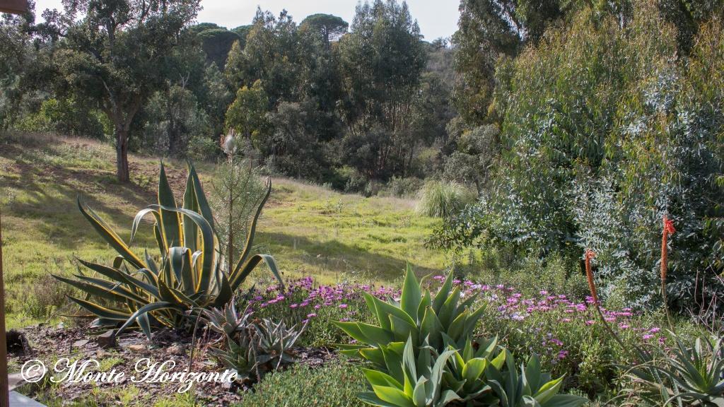 Vlindervakantie Portugal Casa Oliveira Uitzicht