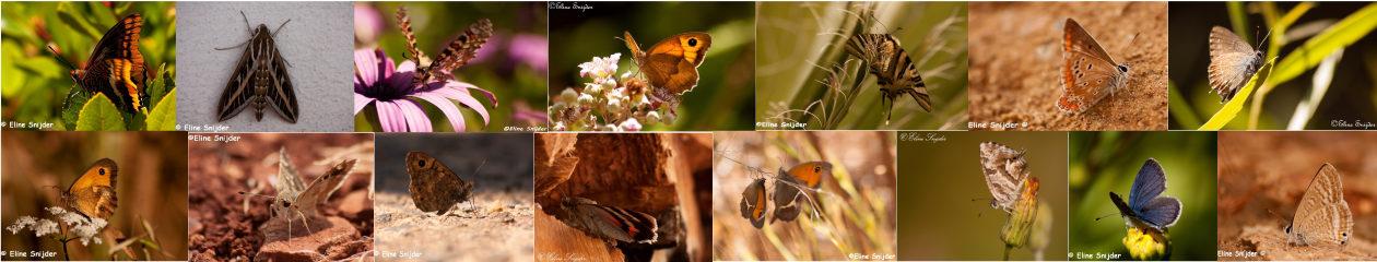 Vlinders Portugal